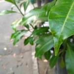 Redmi 3S/3X Camera 3